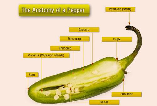 health benefits of eating jalapenos
